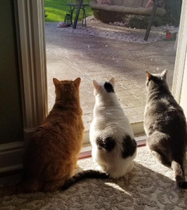 Three Sweet Cats