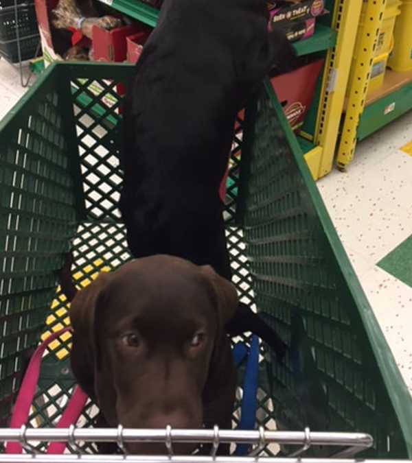 Jake and Maggie's first trip to Pet Supplies Plus