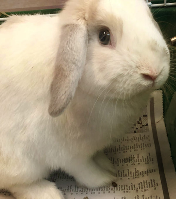 Sweet bunnies up for adoption!