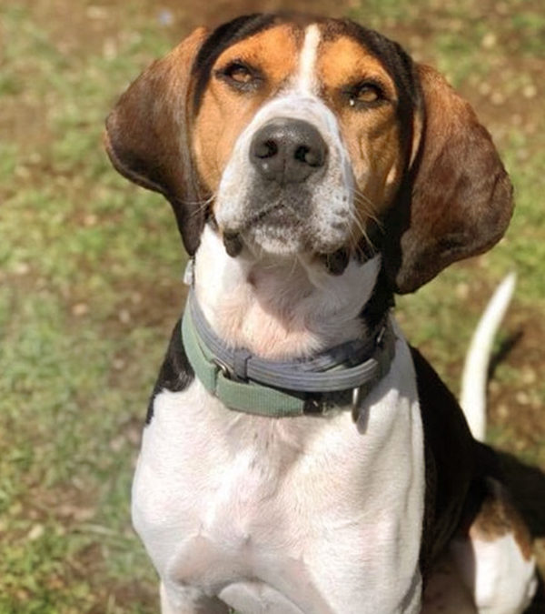 Earl The Hound Dog