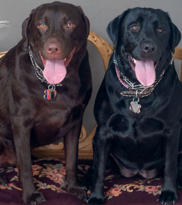 Two Adorable Labs has a new look!