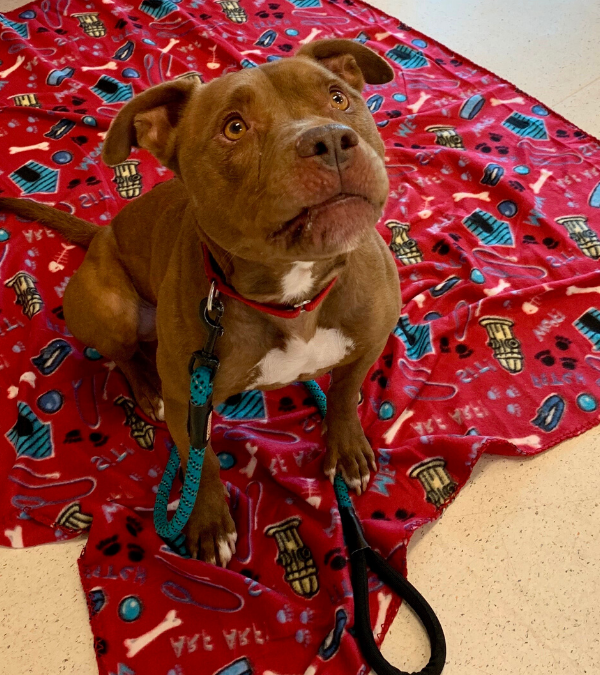 Eli Is Available For Adoption