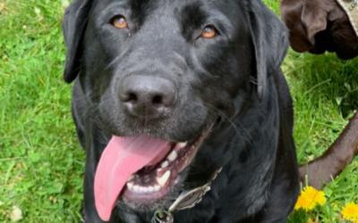 Marine Veteran Adopts Dog Who Saved His Life