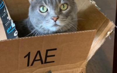 Three Ways Cats Communicate