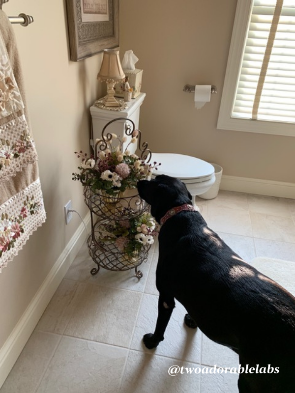 Jack and Jill bath with florals