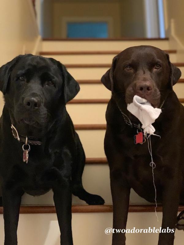 Pups eating socks