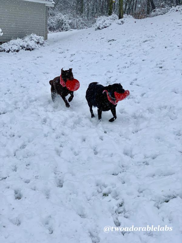 Maggie snow