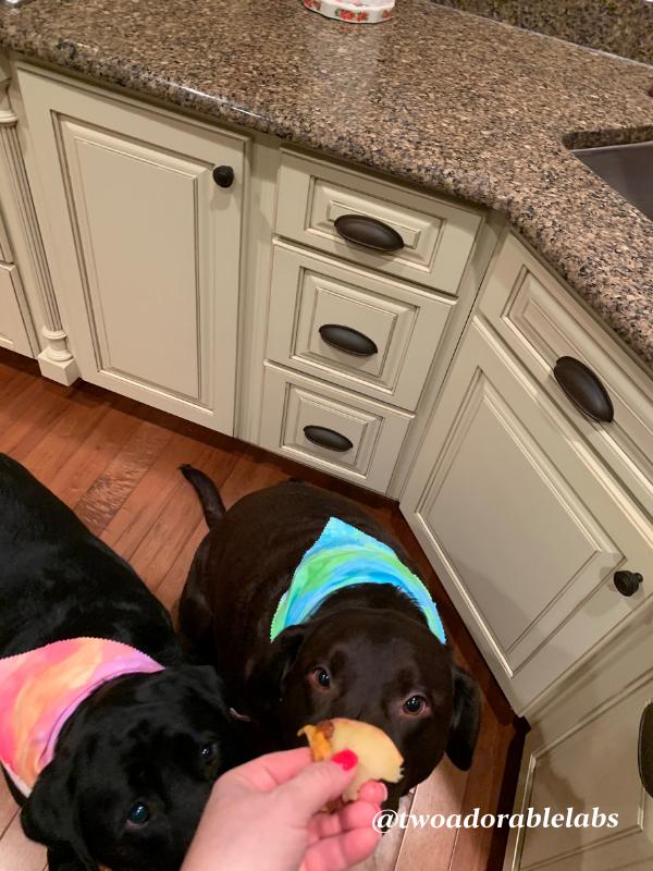 Breakfast Appetizers For Your Pup | www.twoadorablelabs.com