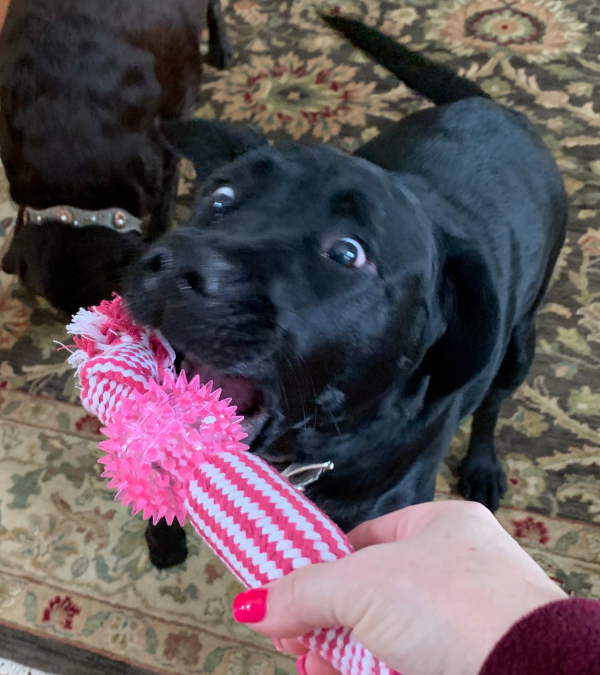 What Does The Color Of Your Dogs Gums Mean?