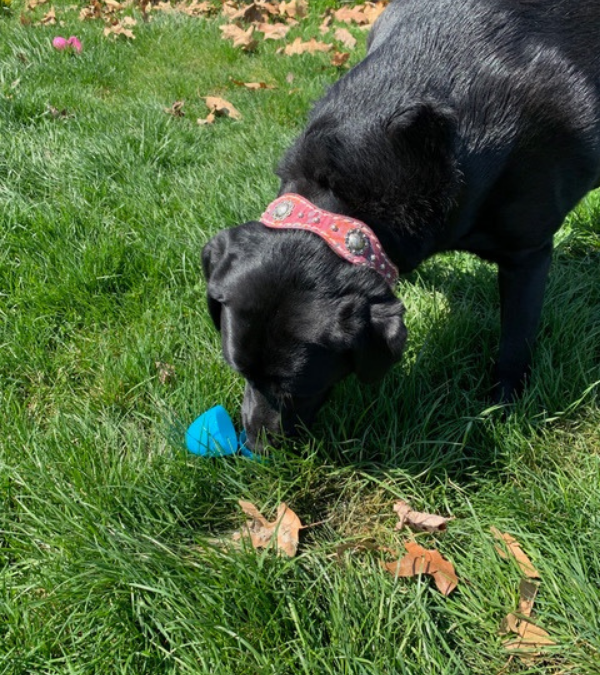 How To Organize An Egg Hunt For Your Pup