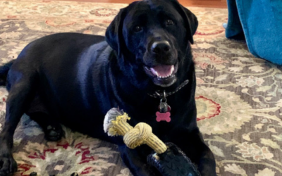 Mammoth TireBiter Dog Toy Product Review