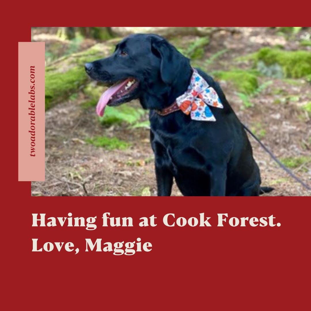 Cook Forest   www.twoadorablelabs.com